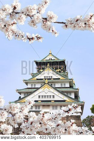 Branch of the blossoming sakura with white flowers and Osaka castle, Japan. On sunny blue sky background. Japanese hanami festival when people enjoy sakura blossom. Cherry blooming season in Asia