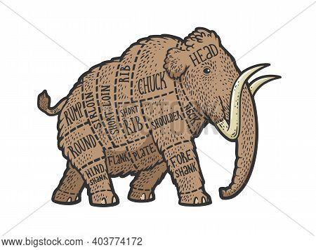 Mammoth Meat Scheme Cut Of Beef Sketch Color Engraving Vector Illustration. T-shirt Apparel Print De