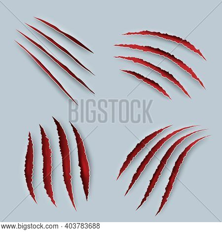 Claw. Scary Scratches With Blood Tiger Claws Decent Vector Realistic Templates. Scratch Injury From