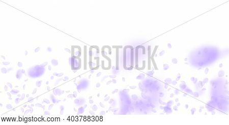 Violet Flower Petals Falling Down. Mesmeric Romantic Flowers Gradient. Flying Petal On White Wide Ba