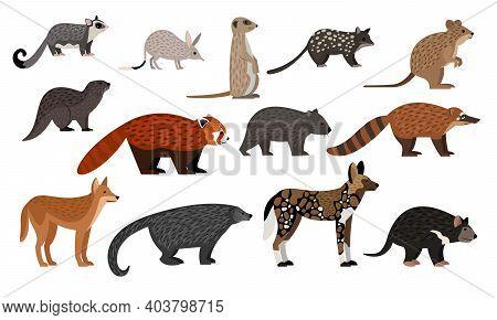 African Animals Set. Cartoon Sugar Glider, Bilby Quoll Quokka Otter Red Panda Binturong Coati Dingo