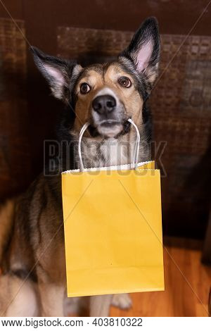 Funny Dog With A Shopping Bag In His Teeth. Concept Of Shopping For Animals. Environmental Package.