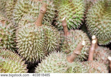 Pile Of Durians After Harvest With Another Durians On Background. Shallow Depth Of Field. Concept Fo