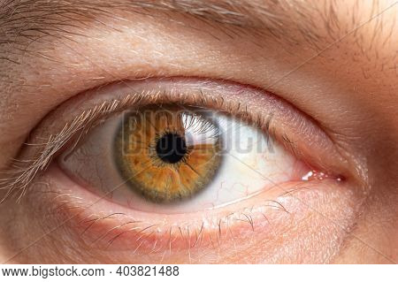 Macro Photo Of The Male Eye Is Brown. Healthy Human Cornea Close Up