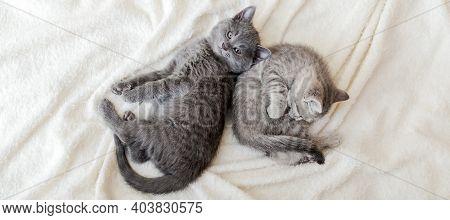 Couple Fluffy Kitten Relax On White Blanket. Little Baby Gray And Tabby Adorable Cat In Love. Kitten
