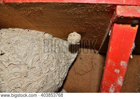 A Large Nest Of Wasps Built Under A Table In An Apiary
