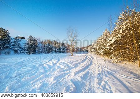 Snow Curonian Spit Dunes In January Winter Sunny Day. Blue Sky And Sea, Forest Evergreen Trees In Sn