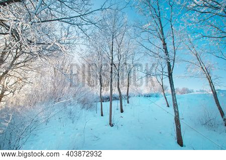 Blue Sky, Sunny Weather. Forest Trees In Snow. Wonderful Fairytale Christmas New Year Weather. Winte