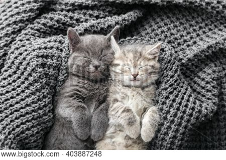 Couple Cute Kittens In Love Sleeping On Gray Soft Knitted Blanket. Cats Rest Napping On Bed. Feline