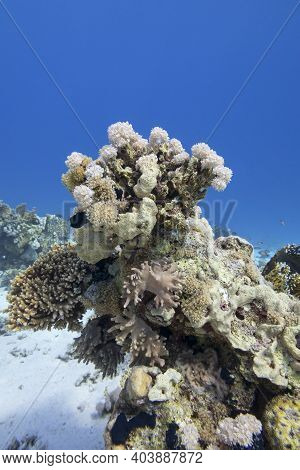 Colorful Coral Reef At The Bottom Of Tropical Sea, Soft Corals And Sea Sponge, Underwater Landscape