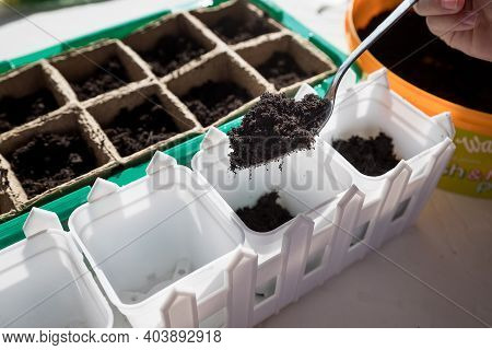 Seeds Of Plants And Flowers In A Plastic Box Container For Seedlings With Childs Hand. Seeds Prepare