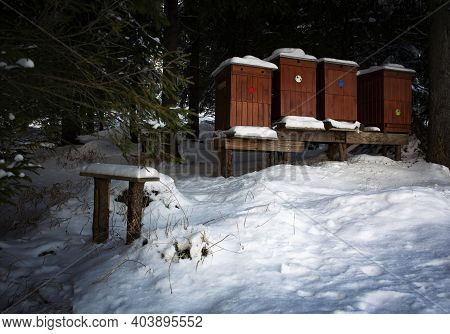 Nature Landscape Background Beehive In A Snowy Forest