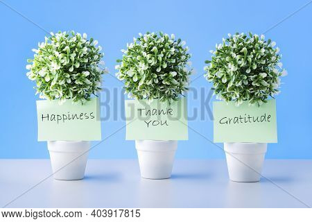 Notes With Words Thank You, Gratitude And Happiness On Green Plants In Pots.