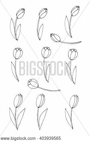 Set Of Outline Tulip Flowers Isolated On White Background. Hand Drawn Design Element. Simple Black C