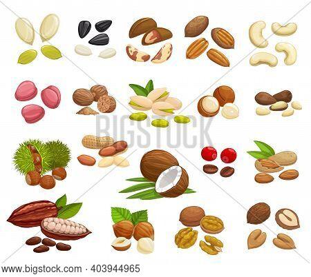 Nuts, Beans And Seeds Vector Design Of Super Food. Almond, Walnuts, Hazelnut, Peanut, Pistachio, Cas