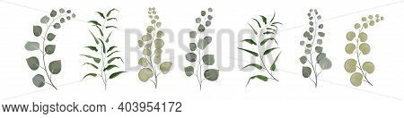 Vector Set From A Set Of Herbs. Green Herbs, Branches With Moldings, Plants. Greens On White Backgro