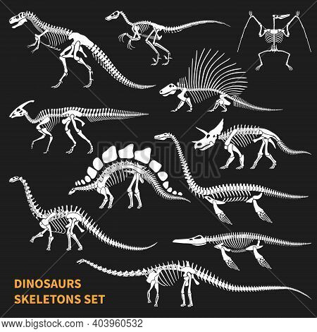 Dinosaurs Skeletons Isolated Icons Set On Blackboard Background In Chalkboard Style Hand Drawn Vecto