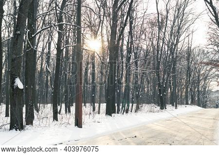 Winter Landscape, Forest In Winter And Sun Rays