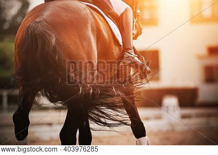 A Bay Horse With A Rider In The Saddle Waving A Long Dark Bushy Tail And Participates In Dressage Co