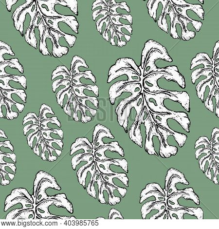 Botanical Seamless Background, Tropical Monstera Leaf. Realistic Illustration In The Style Of Realis
