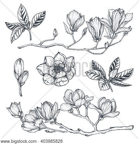 Vector Collection Of Hand Drawn Magnolia Flowers, Leaves And Branches.