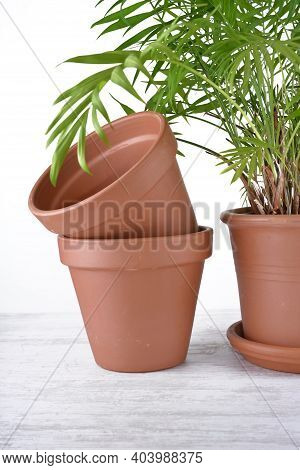 Green Houseplant In A Plastic Pot  Next To Terra Cotta Pots On A Table