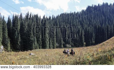 Three Riders On Horseback Climb Through A High-altitude Meadow To A Dense Spruce Forest. Autumn Land