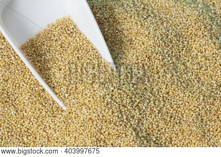 View Of Foxtail Millet (also Known As Italian Millet) Which Is A Healthy Food For Heart
