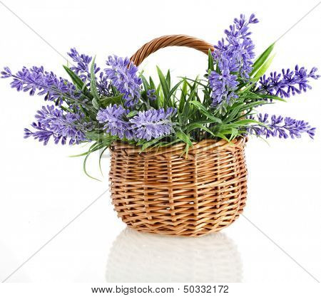 wicker basket with lavender flowers plant bouquet isolated on white background poster
