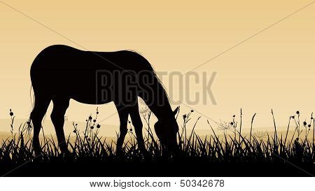 Horizontal vector illustration of horse grazing in the meadows at sunset (twilight). poster