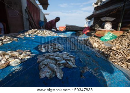 PADANG - AUGUST 25: Freshly caught fish is put out on display for sale at a village market in Padang, West Sumatera, Indonesia on August 25, 2013. Resources from the sea is a major revenue earner.