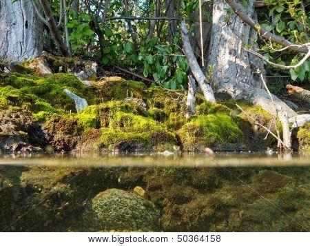 Riparian Habitat Ecosystem Of Forest Lake Shore