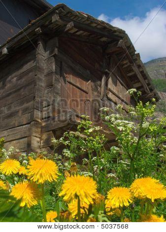 Old Cottage Hut In Summer