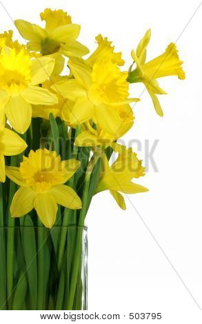 Daffodils In A Square Glass Vase