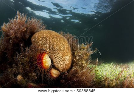 Coral and lush sea grass reef scape