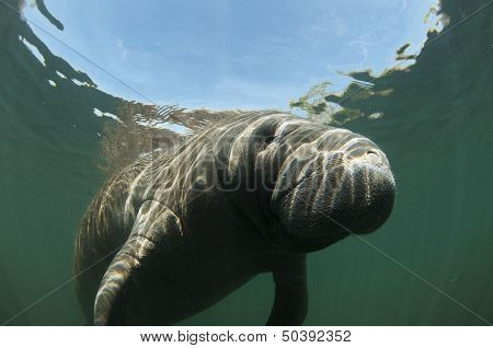 Manatee and Snells Window