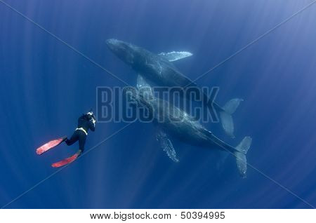 Underwater Photographer with Whales