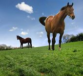 Two horses in a grassy meadow with beautiful sky and surroundings. poster