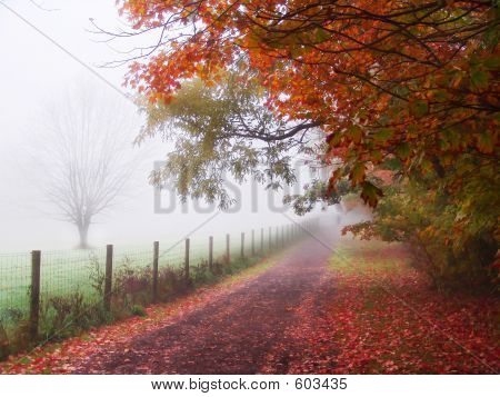 foggy_walk