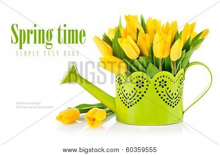 Bunch yellow tulips in watering can. Isolated on white background