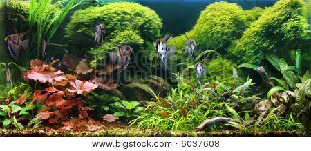 Decorative aquarium. Beautiful logo for a desktop. poster