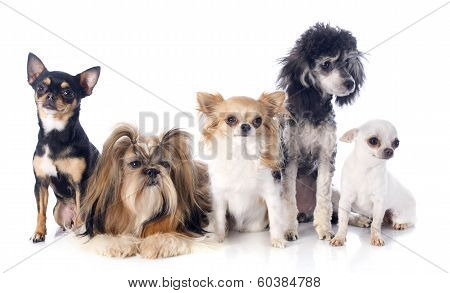 Five Little Dogs