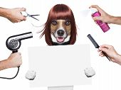 hairdresser dog holding a white and blank placard poster