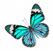 The Beautiful blue fancy butterfly isolated on white background poster