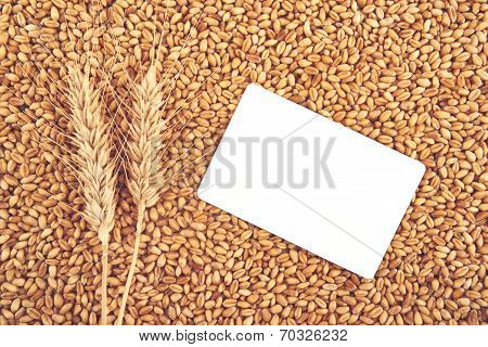 Wheat Grains And Ears As Agricultural Background