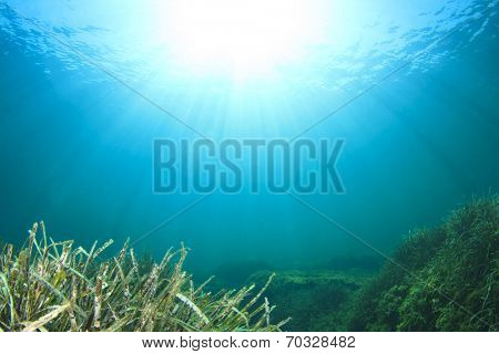 Underwater background with seaweed and sun