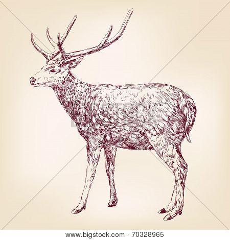 Deer hand drawn vector llustration realistic sketch poster