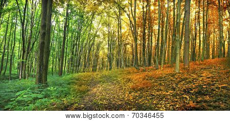 Two seasons in the forest summer and autumn