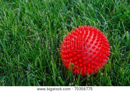 Red Ball In Grass