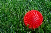 A red plastic ball sits in the grass in between rounds of fetch with the family pet poster